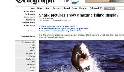 Zobacz, jak rekin zabija fokę