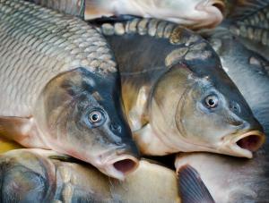 16 milionów martwych ryb i skażenie wody pitnej - to konsekwencje obniżenia poziomu wody w zbiorniku na Dnieprze o 3 metry