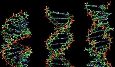 Już za kilka lat każdy pozna swoje DNA