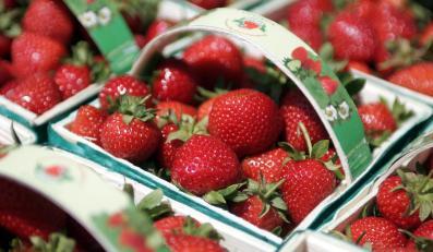 Złodzieje zaatakowali nożem właściciela plantacji truskawek