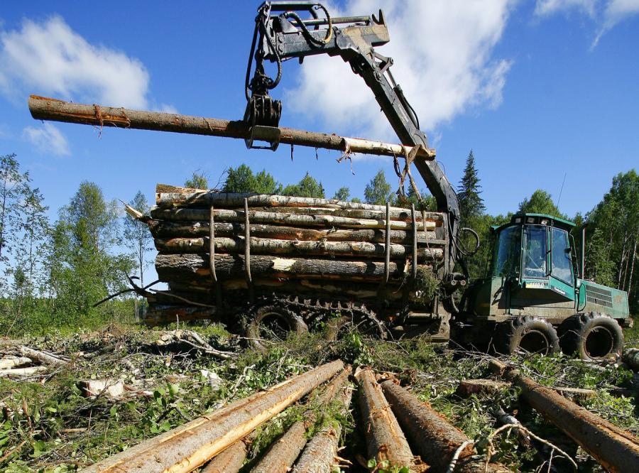 Polska kupuje drewno z nieleglanych wyrębów