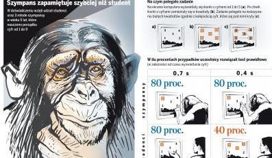Szympans zapamiętuje szybciej niż student
